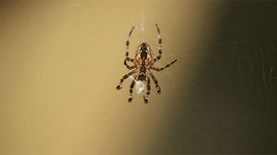 Curious Spider