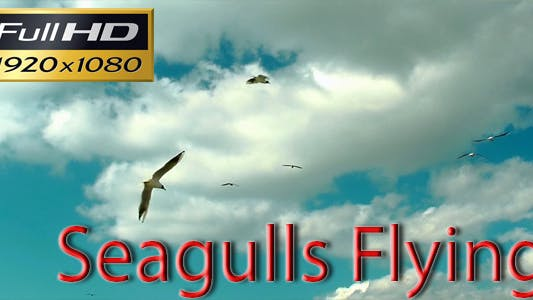 Thumbnail for Seagulls Flying