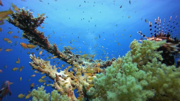 Thumbnail for Underwater Scene Coral Reef