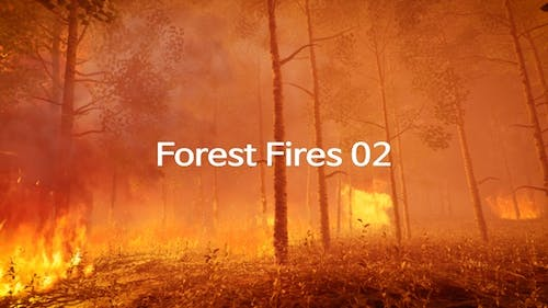 Forest Fires 02