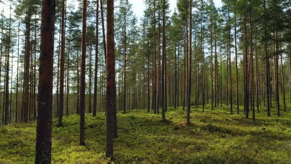 Thumbnail for Beautiful Nature of Finland