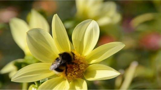 Bumblebee 9