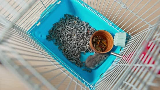 Hamster Inside the Cage