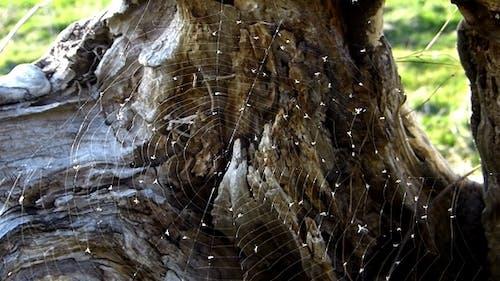 Cobweb 3