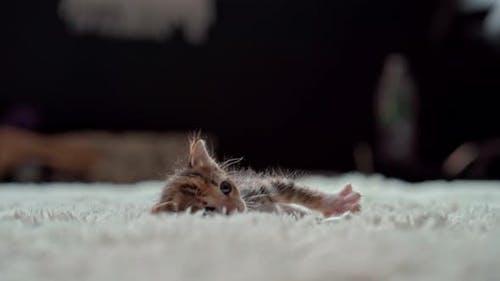Niedliches kleines Kätzchen auf einer pelzigen weißen Decke
