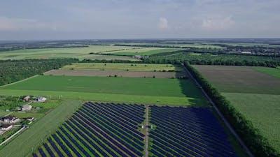 Solar Panel in Solar Farm