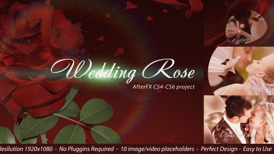 Thumbnail for Wedding Rose