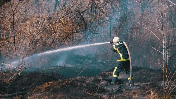 Thumbnail for Firefighter in Equipment Extinguish Forest Fire with Fire Hose. Wood, Spring Day