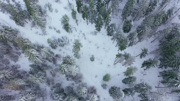 Flight Over the Winter Snow-covered Forest. Winter Forest As Background