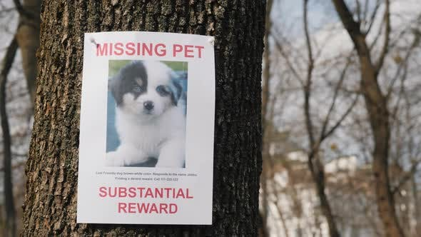 Poster with Information About the Missing Pet