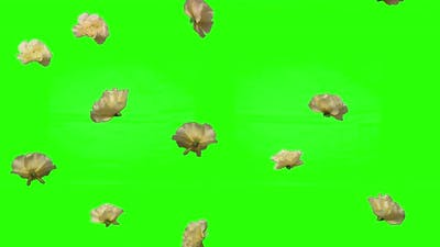 Roses Falling Down on Green Screen