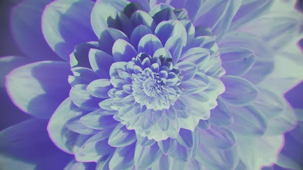 Flower that changes colors