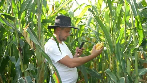 A farmer exploring a corn crop