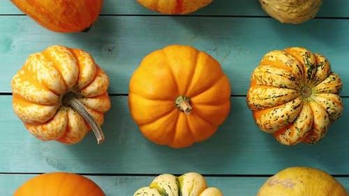Orange Pumpkins Laid in Lines
