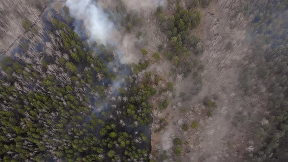 Thumbnail for The Border of a Forest Fire in the Forest. Puffs of Smoke Rise From a Burnt Forest