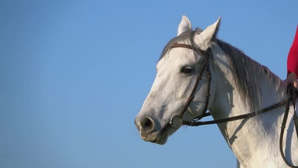Thumbnail for Close Up of Horse Face on Blue Sky Background. Slow Motion . Close Up