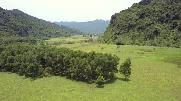 Thumbnail for Large Meadow with Trees Against Mountains Aerial View
