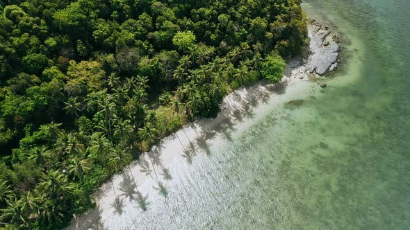 Thumbnail for Drone Aerial Fly Down To Paradise Sandy Beach with Palm Trees Swaying in the Wind. Exotic Travel