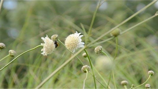 Thumbnail for Bumblebee 13