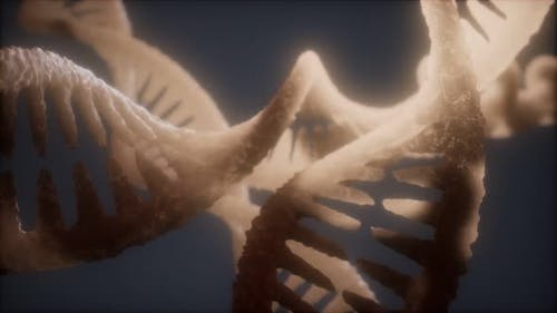 Loop Double Helical Structure of Dna Strand Closeup Animation