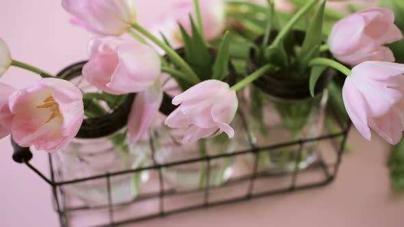 Tulipes rose clair sur fond rose