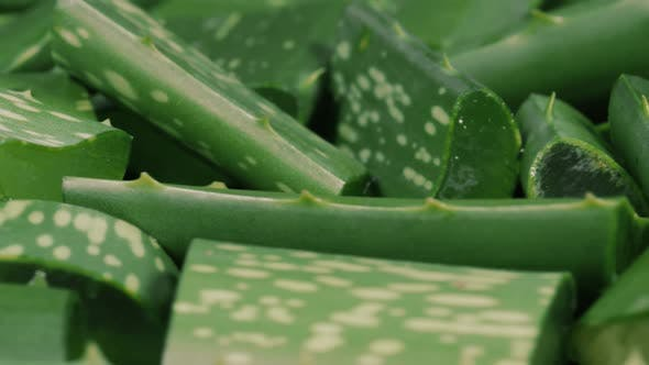 Cover Image for Aloe Vera Cut Leaf