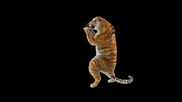 Thumbnail for Tiger HD