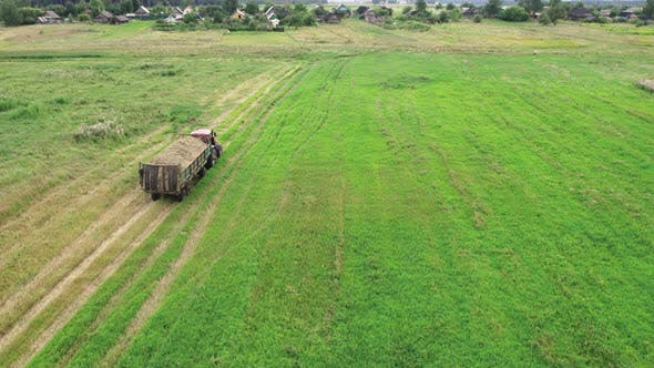 Tractor Carries the Mown Grass Across the Field