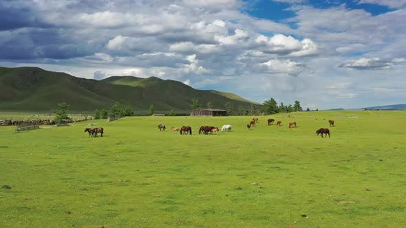 Thumbnail for Aerial of Grazing Horses on Pastures in Mongolia