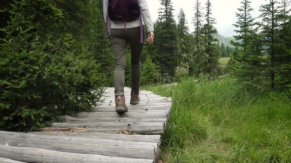 Thumbnail for Girl Hiker Walking By The Wooden Walkway Path