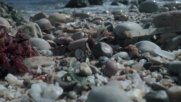 Thumbnail for Macro Footage of Wet Pebbles on Sea Shore