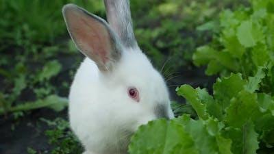 White rabbit in green grass, rabbit eating grass