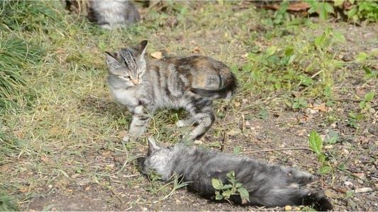 Thumbnail for Kittens 10