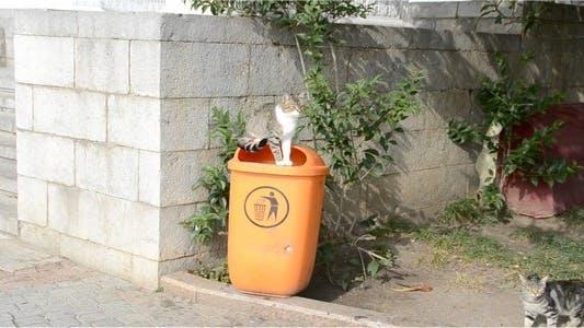 Kittens 11