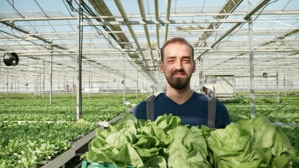 Cover Image for Young Farmer in a Greenhouse Carries a Box with Green Salad