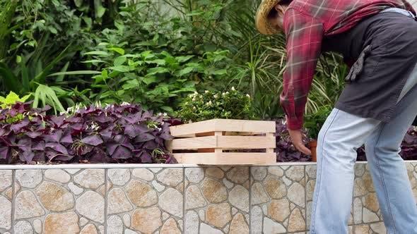 Thumbnail for Elderly Male Gardener Putting Into Box Green Flowerpots