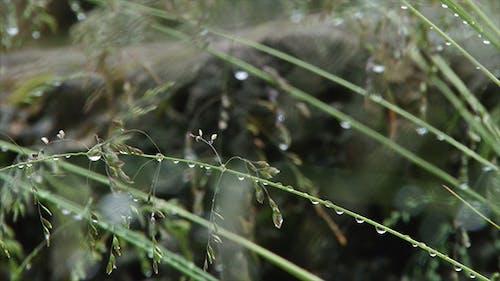 Grass Water Drop