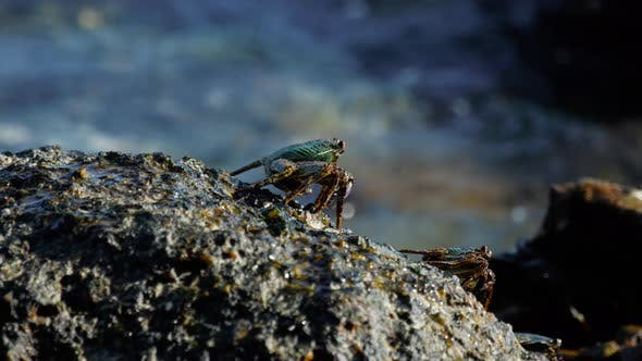 Cover Image for Crab on the Rock at the Beach