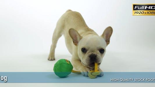 Thumbnail for Dog 5