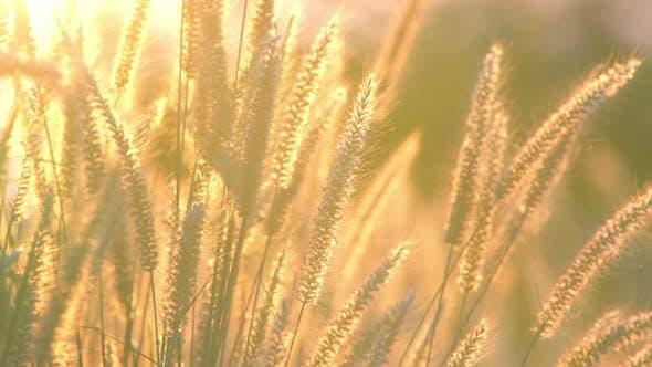 Thumbnail for Summer Grass