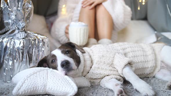 Thumbnail for Lazy, Cozy, Hygge Lifestyle. Woman And Dog In Knitted Sweaters Relaxing At Home