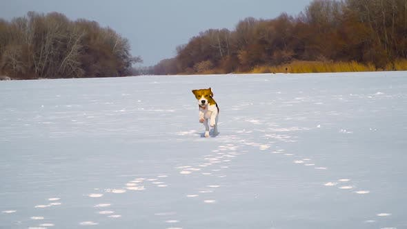 Thumbnail for Puppy Running Through the Snow