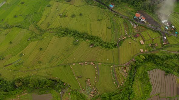 Aerial View of Lush Green Terraced Paddy Fields in Bali