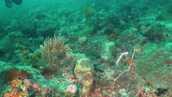 Thumbnail for Coral Reef and Tropical Fish. Bali,Indonesia