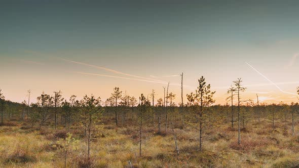 Autumn Landscape With Marsh Swamp During Sunset. Dark Trees Silhouettes On Colorful Sunset Sky