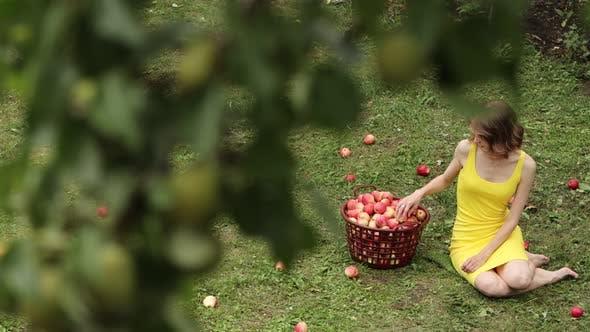 Picking Apples.