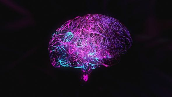 Brain 05