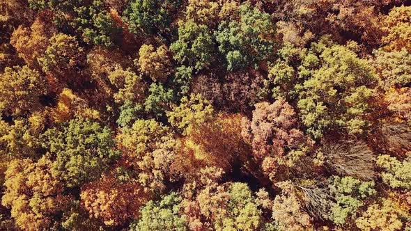 Beautiful landscape on a multi colored autumn forest. Aerial view. Camera motion up