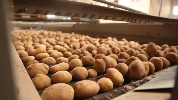 Potato cleaning process in food production factory.