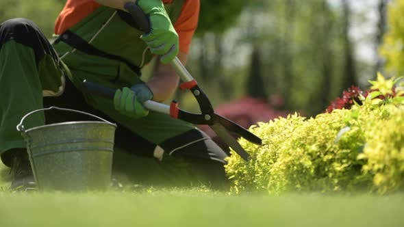 Agriculture Industry. Gardener Trimming Plants